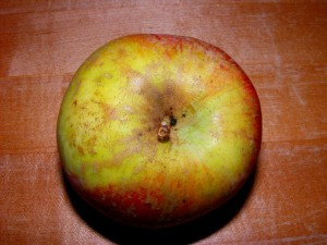 5 apple 300x225 09 October 2008