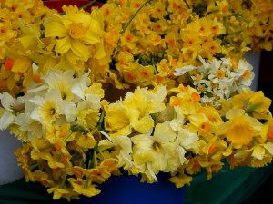 10 farmers market daffodils 300x225 Menu Plan Monday (vegetarian/vegan/macrobiotic)