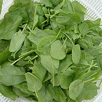 greens baby spinach greens baby spinach