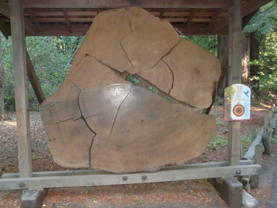 06 jesus tree Monterey & Redwoods