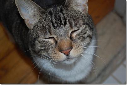 cat couscous
