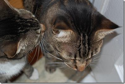cats kabocha couscous