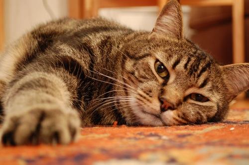 09 bo cat Ketchup Versus Catsup